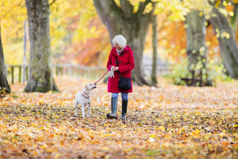 Senior woman walking in park with dog in autumn